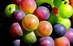 Простой рецепт чачи из винограда в домашних условиях