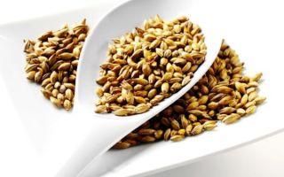 Простые способы приготовления солода в домашних условиях из ячменя и пшеницы